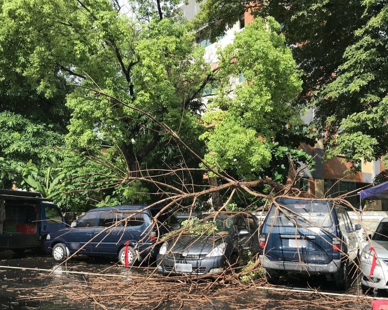 高市風強雨大 打落學校枯枝 壓損牆外3車