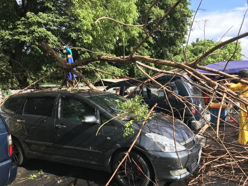 高市今天下午風雨強大,學校枯枝被風雨掃落,壓損牆外3車。(記者陳文嬋翻攝)
