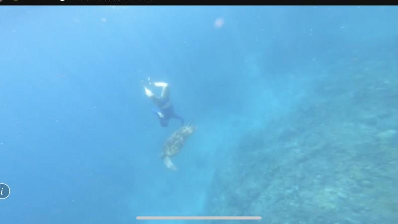 海巡署人員抽絲剝繭,查到該名數度觸摸海龜的違法民眾。(記者陳彥廷翻攝)