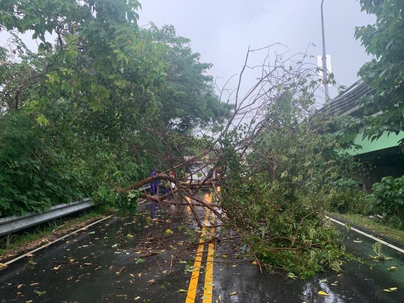 南屯區筏子東街一段路樹倒塌,疑似擊中機車騎士。(記者何宗翰翻攝)