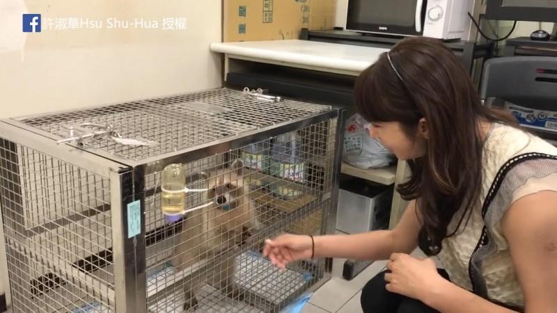 小浣熊被安置後近況良好。(圖片由Facebook粉絲專頁許淑華Hsu Shu-Hua授權提供使用)