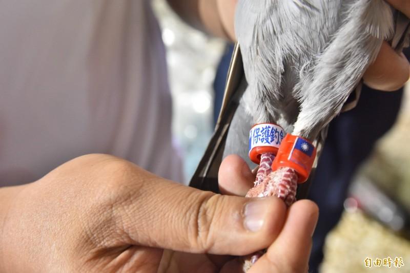 保釣團體還有「空軍」,準備用和平鴿空襲釣魚台。(記者張議晨攝)