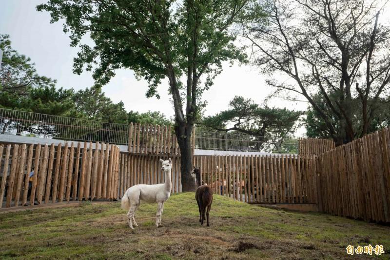 竹市動物園新嬌客「咖啡」與「牛奶」要見客了! - 生活 - 自由時報電子