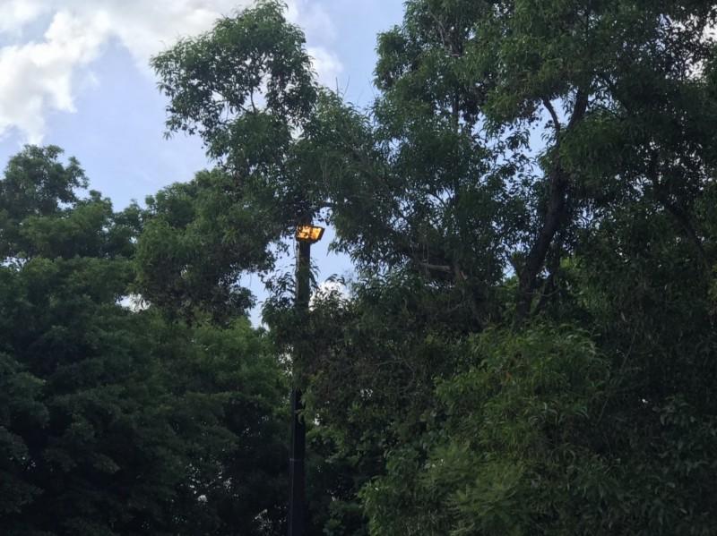安平區府平公園的電燈到大白天還亮著,工務局表示,是因民眾私自開啟電源開關箱調整放亮時間,造成啟閉時間異常。(議員李啟維提供)
