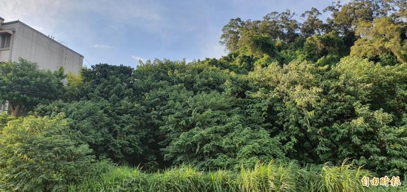 600萬買透天厝,竟與3處墳墓當鄰居!圖中墳墓已遭茂密林木掩蓋。(記者蔡彰盛攝)