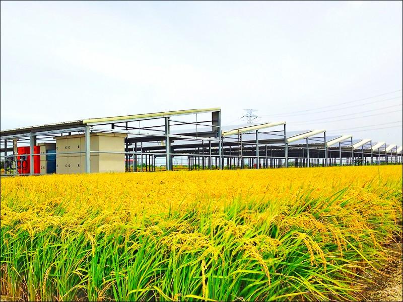 農委會修正「農業主管機關同意農業用地變更使用審查作業要點」,2公頃以上農業用地變更要設置太陽能發電設施者,都要先經農委會審查同意,最快月底前公告實施。(資料照,綠色陣線提供)