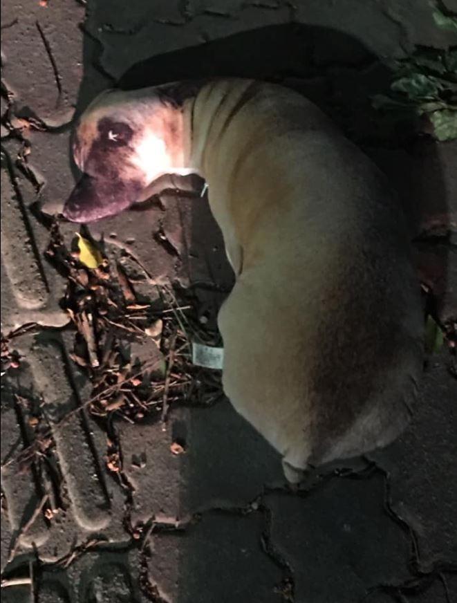 原PO貼出被棄置在路邊的狗娃娃,看起來非常逼真。(圖擷自爆怨公社)