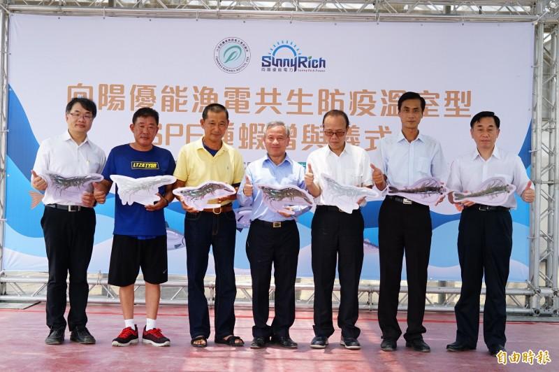 向陽無償提供1.2萬尾SPF種蝦給另2間SPF業者。(記者陳彥廷攝)
