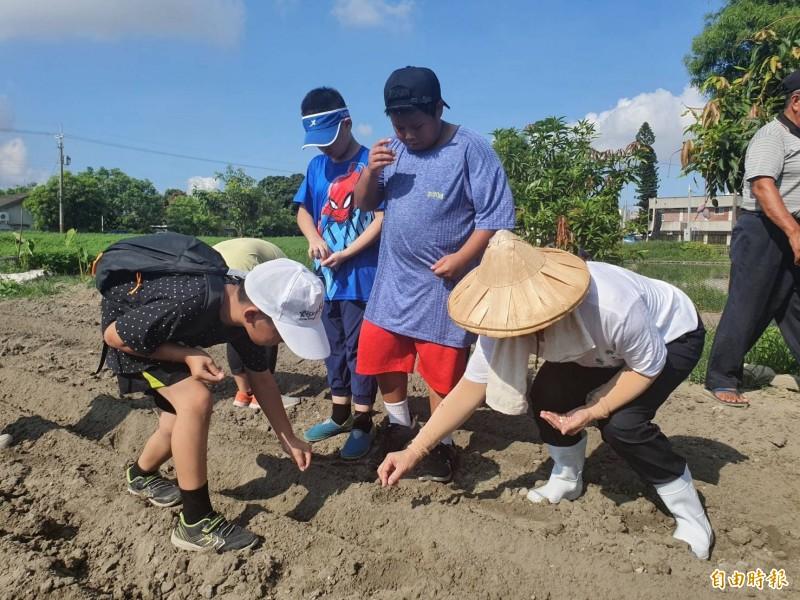 小學生艷陽下種玉米,體驗農村生活。(記者詹士弘攝)