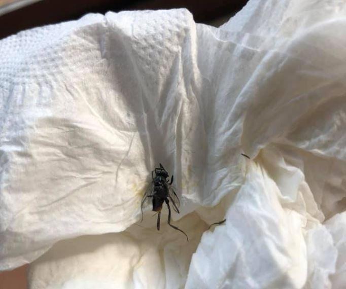 有網友在臉書分享捏爆一隻小黑蟲的照片,直呼長得不像蒼蠅,還說捏爆當下雞皮疙瘩掉滿地,相當好奇這是什麼蟲。對此,有網友指出,這隻小黑蟲其實是益蟲,名為「蜚蠊瘦蜂」,又被稱為是「蟑螂天敵」。(圖擷取自臉書「爆廢公社公開版」)