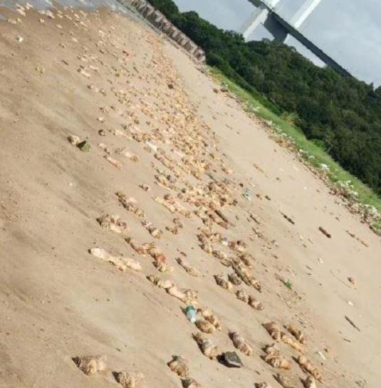 東莞市虎門威遠島的沙灘上,日前一夜之間出現大量豬腳以及動物內臟,畫面相當驚人。(圖擷自微博)