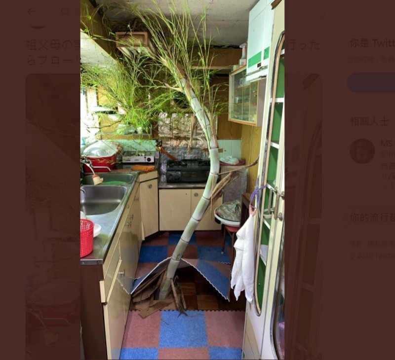 日本有網友1個多月沒回老家,沒想到家中廚房的地板竟被「竹子」貫穿,照片PO出後也引發網友熱議。(圖擷取自「ma_Estate」推特)