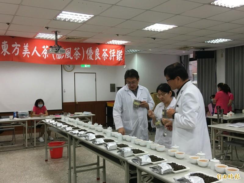 新竹縣夏季東方美人茶(膨風茶)優良茶比賽,今天在北埔鄉農會進行決賽。(記者蔡孟尚攝)