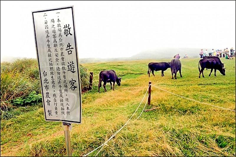 陽明山擎天崗草原發生野生水牛撞死人事件,陽管處判賠396萬元。(資料照)