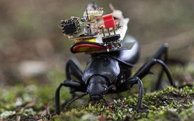 美國華盛頓大學研發出微型攝影機,搭載在甲蟲上可將其拍攝的畫面傳送到智慧型手機裡。(圖擷自Science Robotics)