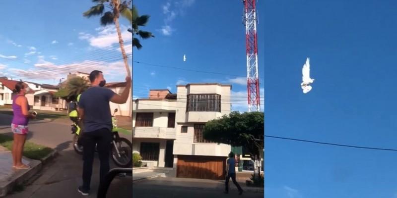外國民眾拍到1隻停滯在半空的鴿子,連警方都感到疑惑。(圖取自Hechizero_Puebla Facebook)