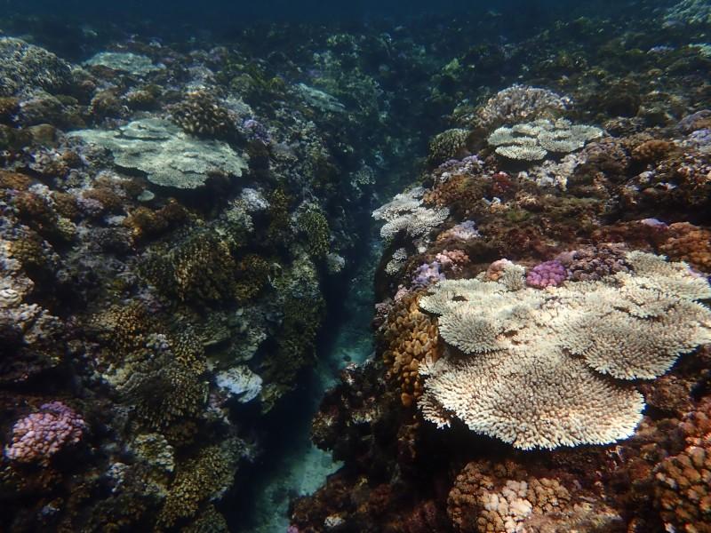 小琉球珊瑚白化嚴重。(樊同雲提供,記者蔡宗憲翻攝)