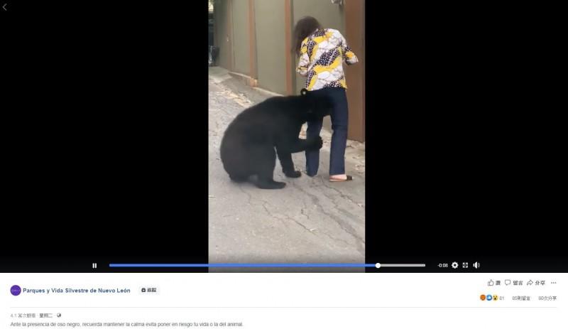 墨西哥日前傳出短褲正妹登山客遇上黑熊「熊抱」,影片在網路上瘋傳。未料,近日在新萊昂州聖佩德羅加爾薩加西亞市的奇平克生態園區附近,又發生類似的情況。(圖翻攝自臉書)