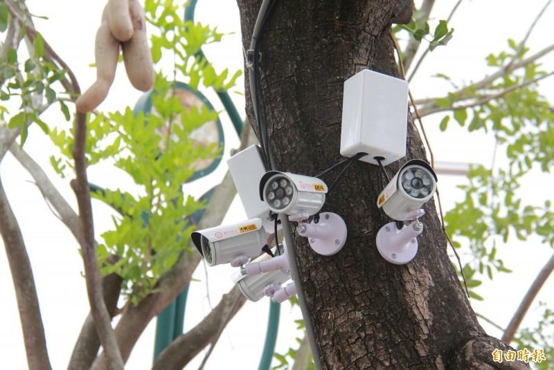 田尾公路花園街角藝文展演空間為了防止民眾亂丟垃圾,在周邊一棵路樹裝設4支監視器。(記者陳冠備攝)