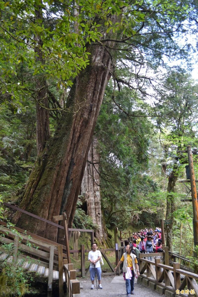 拉拉山巨木區蛻變為國家森林遊樂區 預計2021年完成 – 生活 – 自由時報電子報