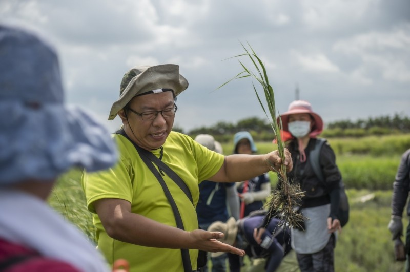 蔡志忠協助移除高美濕地的互花米草,並向學員解說外來物種的危害。(荒野保護協會提供)