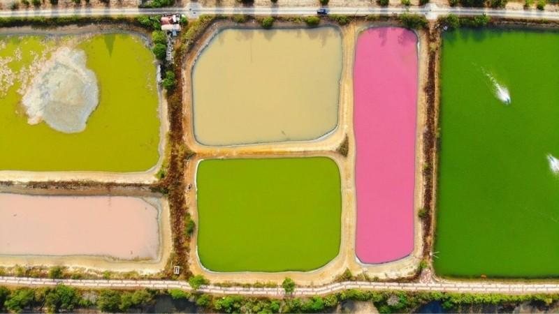 金門雙鯉溼地幾口魚塭,一格格顏色鮮艷,從空中鳥瞰像是調色盤。(許進西提供)