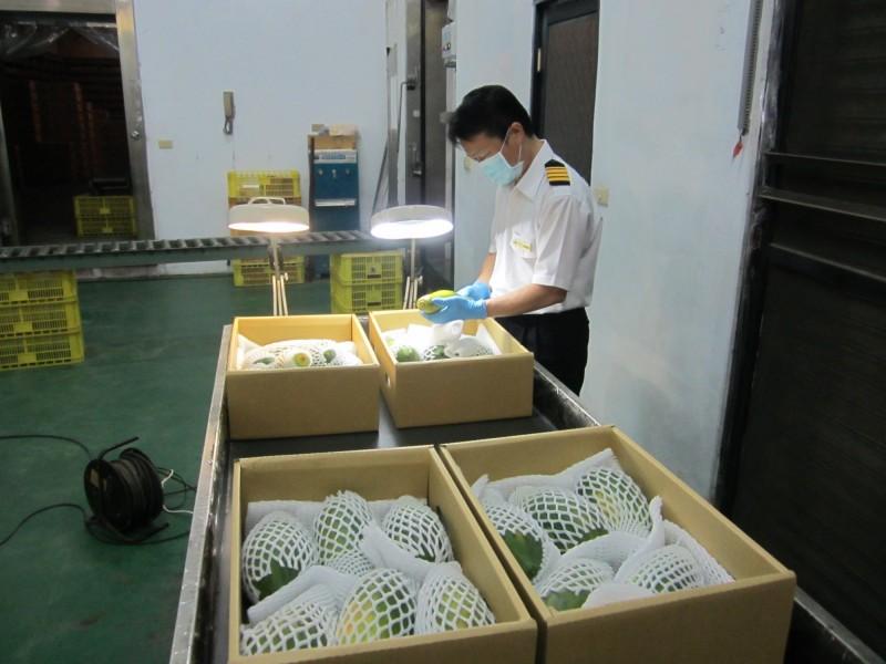我國水果外銷日韓澳創新高,今年更首度由台灣檢疫人員檢疫。(防檢局提供)