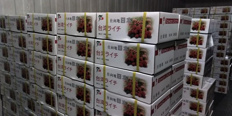 我國荔枝外銷日本銷量創15年新高。(防檢局提供)