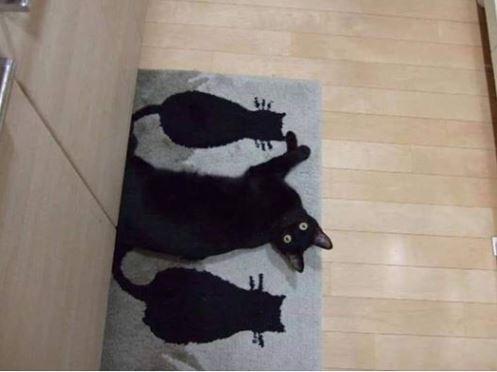 原PO貼出躺在印有貓咪圖樣地墊的黑色喵星人。(圖擷自爆廢公社)