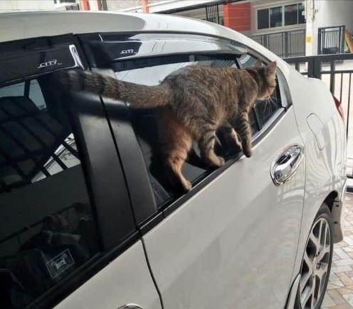 原PO貼出走在車窗邊緣的喵星人,牠看起來非常輕鬆自在。(圖擷自爆廢公社公開版)