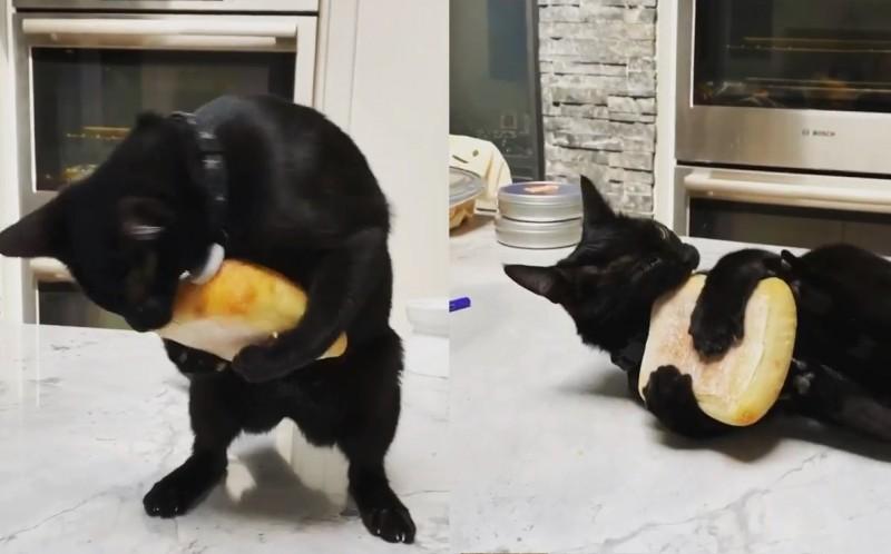 就愛這一味!黑貓激動抱麵包狂啃 網友驚:餓多久了?