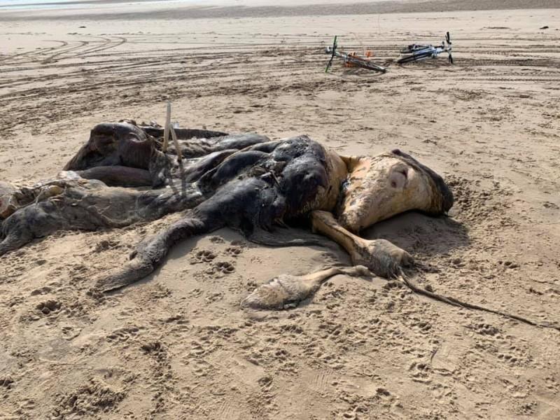英國物利浦沙灘上近期出現1具長達4.572公尺的不明生物遺骸。(圖取自Ainsdale Facebook)