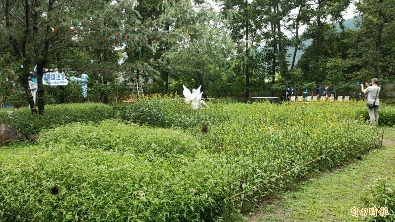 「蝴蝶迷宮」的綠籬全部栽種蝴蝶食草蜜源植物而成數量計有上萬棵。(記者佟振國攝)