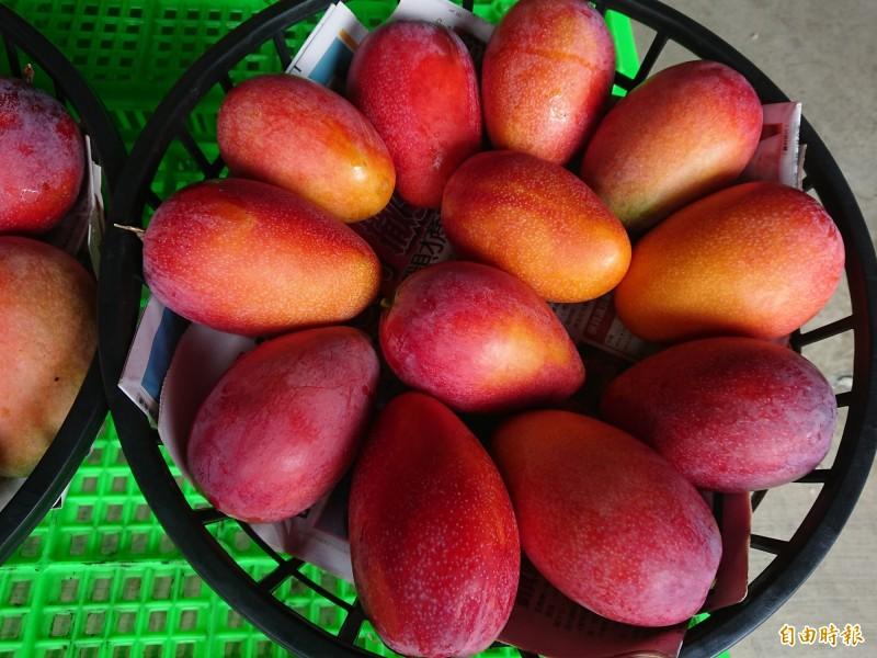 網傳文章稱「芒果是止血的,但是來月經的人不要吃;易生子宮肌瘤」,經查核中心求證專業意見證實,此為錯誤消息。(資料照)