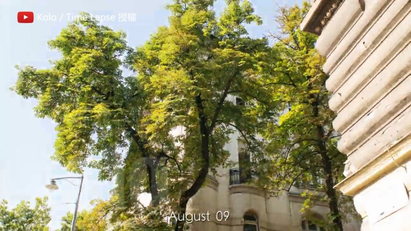 記錄路樹一年的生長。(YouTube Kolo / Time Lapse 授權)