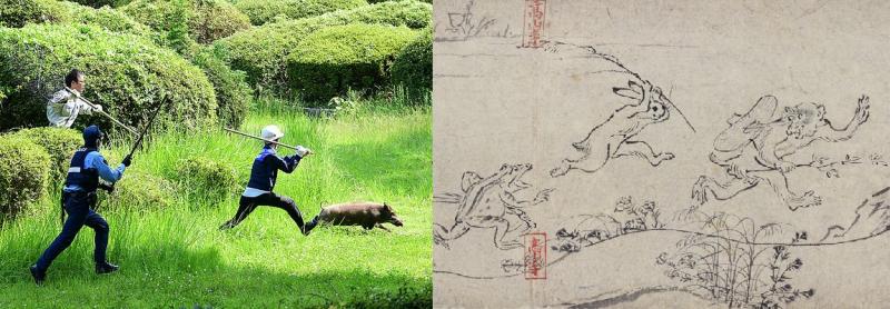 日本警察抓捕山豬照,因為太像國寶《鳥獸人物戲畫》,而在Twitter上爆紅。(圖翻攝自Twitter)