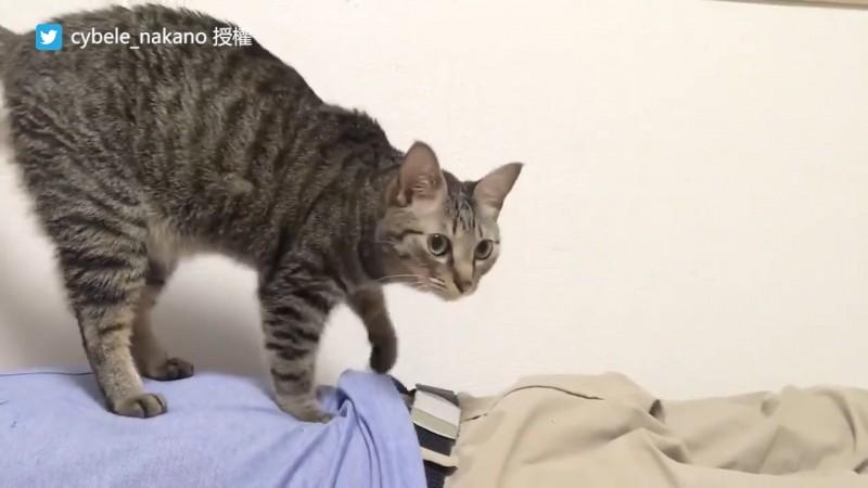 醫療院表示,貓雖然對身體疼痛沒有直接療效,但能抒解病患壓力。(圖片由Twitter帳號cybele_nakano授權提供使用)