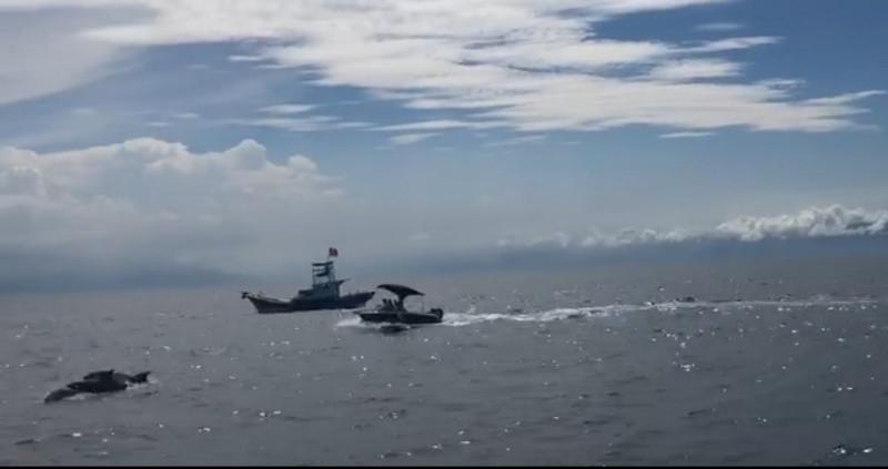 該艘衝鋒艇見小虎鯨群,竟穿過賞鯨船直接朝鯨群衝撞,在旁賞鯨船遊客全程目擊。(讀者提供)