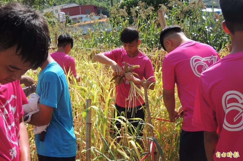 學校推動的「小米田閱讀」跳脫紙本框架,讓學生們實地到田間,觀察小米的成長過程,閱讀在地知識與文化。(記者邱芷柔攝)