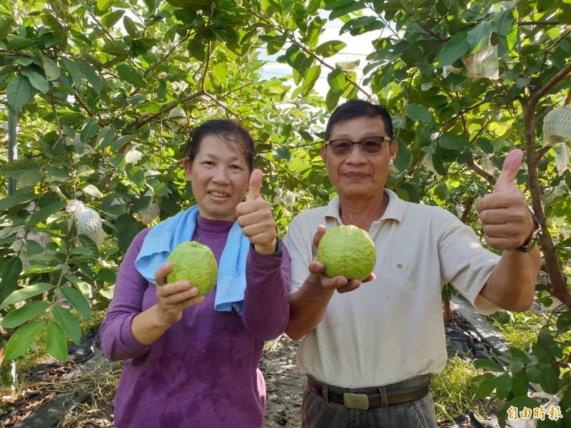 屏東縣高樹鄉農民何連貴(右)從營造業轉務農,成為帝王芭樂專家。(記者羅欣貞攝)