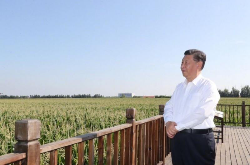 習近平7月22日前往東北視察當地農田,分析指中國糧食危機浮上檯面,習此行是想確認東北下半年糧食產量。(圖取自新華社微博)