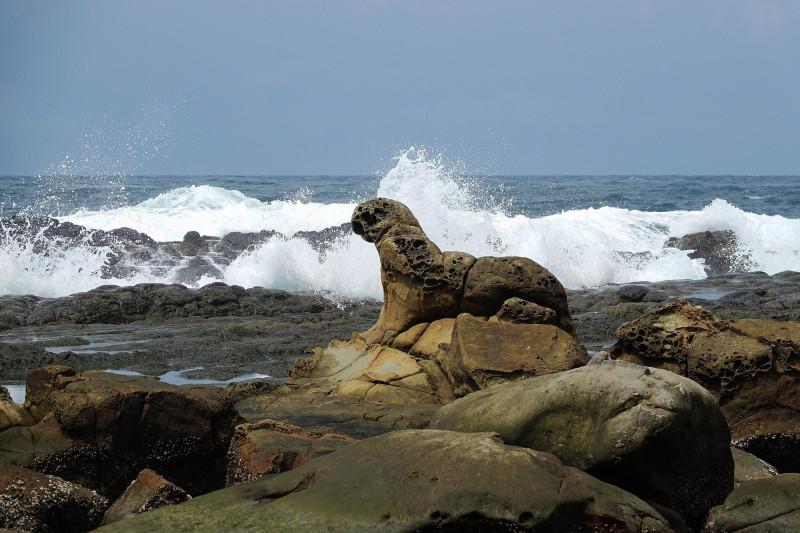 「八斗子漁村再生聯盟」規劃用八斗子漁村傳統建築材料咕咾石,創作1比1比例、形狀的海豹岩。(基隆市野鳥學會提供)