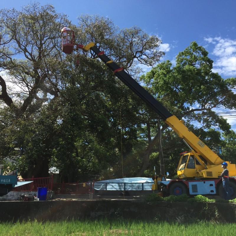 老茄苳樹的防治療程分3期進行,第一次於8月6日施作完成,預計8月13日、8月24日完成第2次和第3次施藥。(圖由縣府農業處提供)