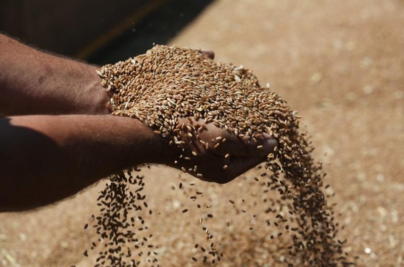 中國國家主席習近平近日作出重要指示,要當局「制止人民餐飲浪費」,讓外界懷疑中國恐出現糧食危機。示意圖。(彭博)