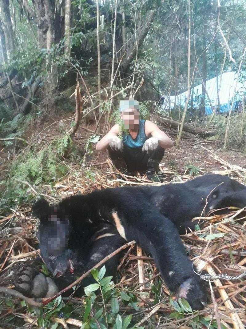 檢警調查涉嫌盜伐珍貴林木的山老鼠集團,在何姓嫌犯手機中發現有他跟台灣黑熊的合照,意外查出他們殺了一隻目前已瀕臨絕種的保育類野生動物。(新竹林管處提供)