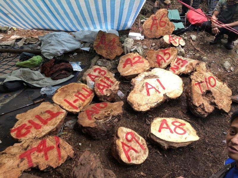 檢警林合作平台在新竹縣觀霧山區查獲山老鼠集團,起出大批被盜伐的珍貴林木。(新竹林管處提供)