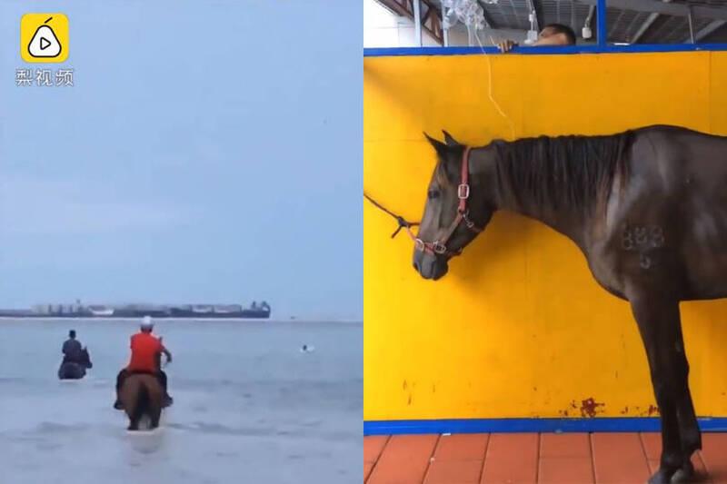 中國3名男子騎馬衝下海營救12歲男童。右圖為其中一隻已逝馬匹的生前照。(圖擷自《梨視頻》)