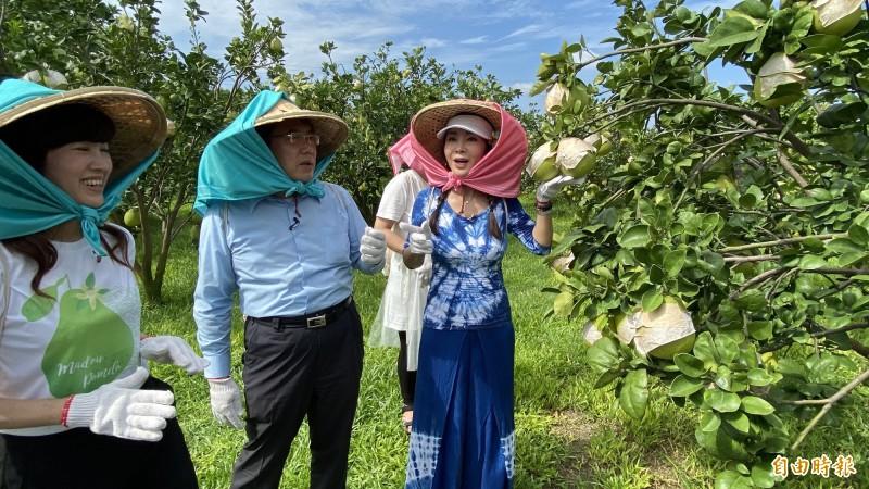 台南市長黃偉哲(中)今天和2位最美農會總幹事孫慈敏(左)、最美歐巴桑稱譽的藝人陳美鳳(右)到柚園示範時尚採果樂,行銷麻豆文旦。(記者楊金城攝)