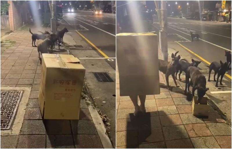 鄭又瑋為了抓紮一隻流浪母犬,躲在紙箱裡面想要偽裝。(圖擷自鄭又瑋臉書)