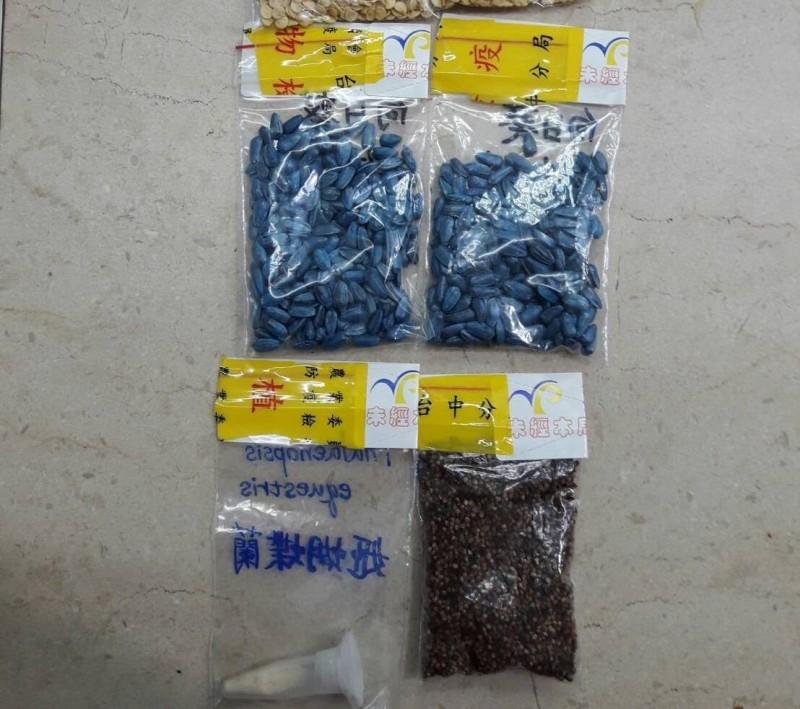 台灣種子將首度登上太空!中興大學選姬蝴蝶蘭、台灣藜、向日葵上太空。(圖由興大提供)